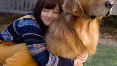 Photo of 抗疫下的新女友品種 「犬系女友」大受歡迎